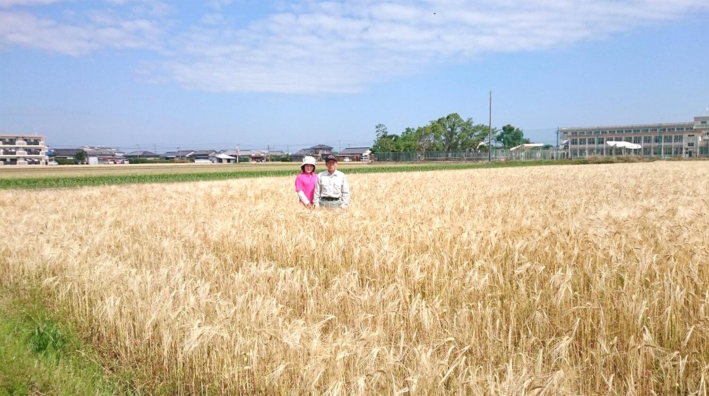 大麦農家の物語